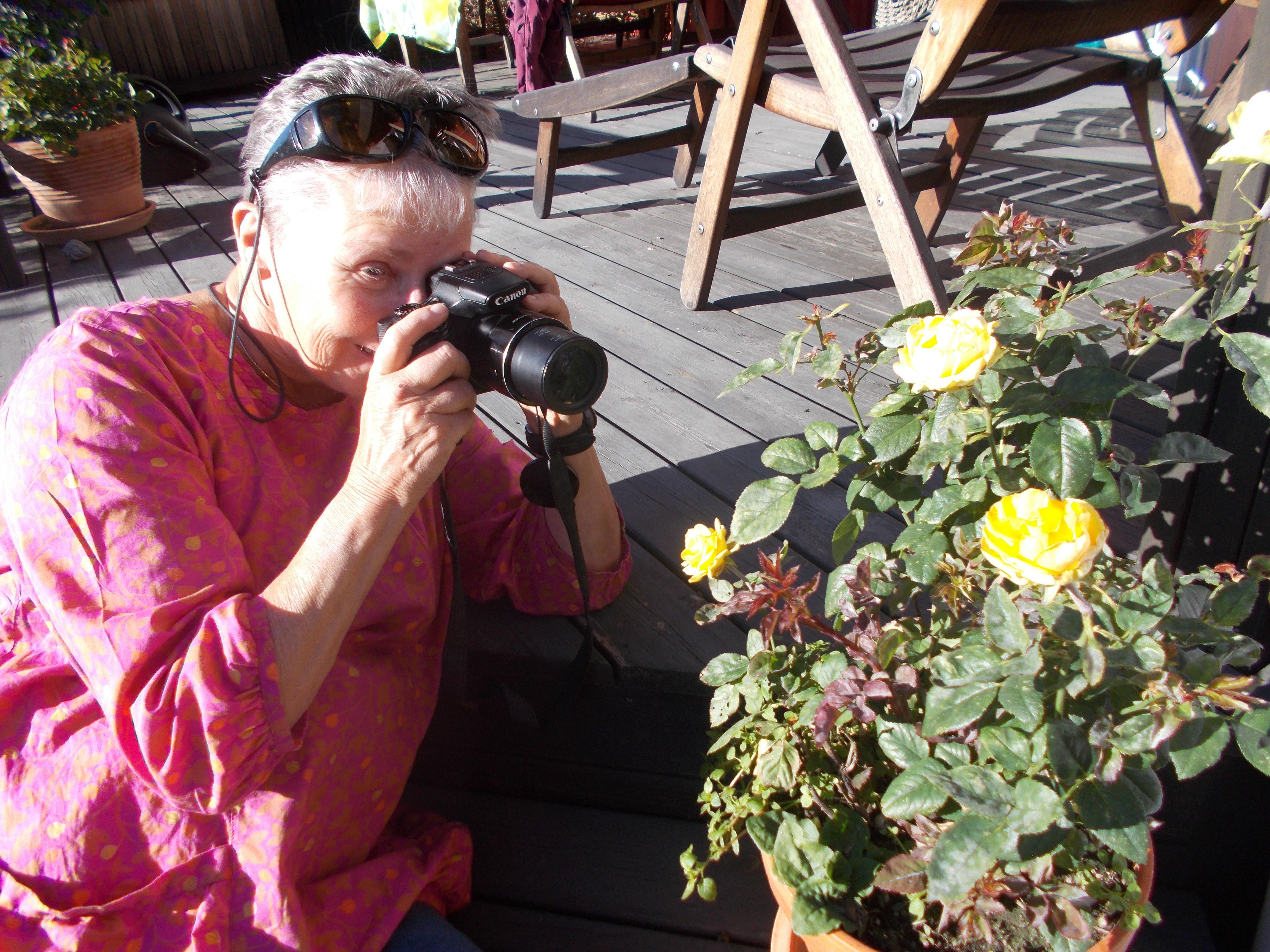 Kortklippt kvinna med grått hår, klädd i rosa tunika, har en kamera framför ögat och fokuserar på att fotografera gula rosor.